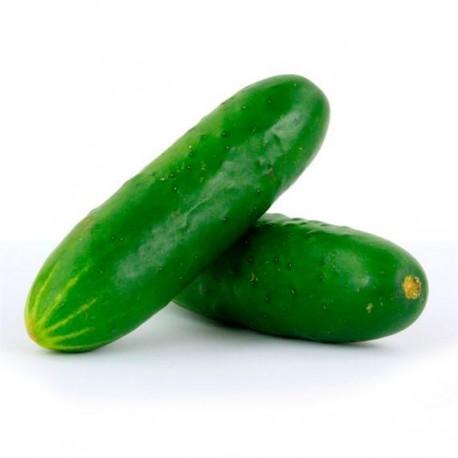 Concombre type libanais (court, lisse) vendu à la pièce, 3€/kg