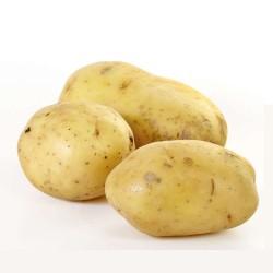pomme de terre nouvelle, 2.50€/kg