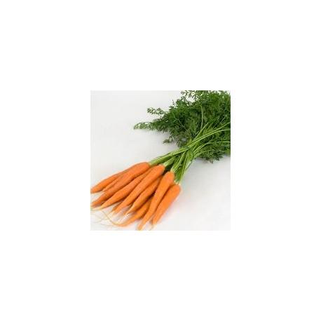 carottes nouvelles botte