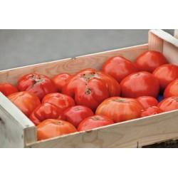 Tomate pour coulis (par 5Kg)
